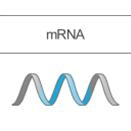 mRNA疗法时代已开启,Moderna公司将成最大生物科技IPO,累计融资将超30亿美金
