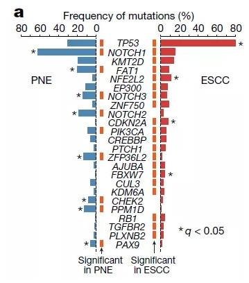 PNE样本和癌症样本中的主要驱动突变的频率。
