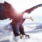 趣说FDA | 蜕变的白头鹰(I)从混乱之治到冰封王座