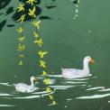 春江水暖鸭先知 制药业变革之下的出路在哪里?