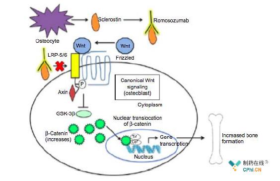 Romosozumab