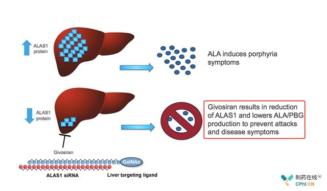 givosiran:降低酶aminolevulinate synthase 1合成