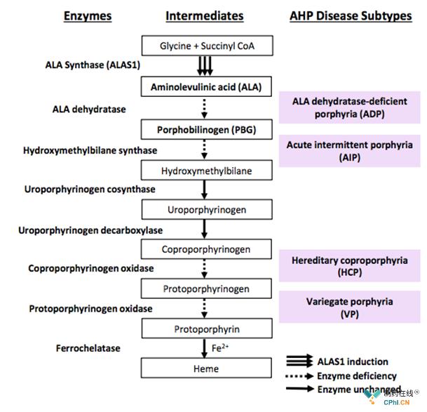 急性间歇性卟啉病(AIP)是最常见的类型