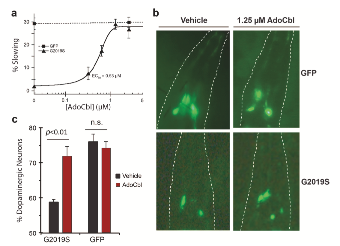 AdoCbl Showing Mixed-type Inhibition