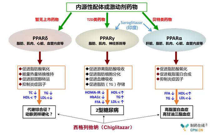 西达本胺的一般性作用机理