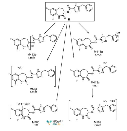 鼠(r)、猴子(m)、人 (h) 肝细胞代谢分析