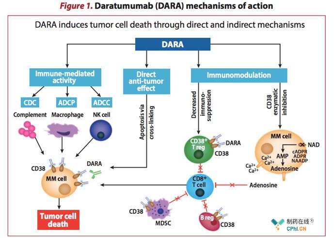 达雷妥尤单抗:多发性骨髓瘤的变革者