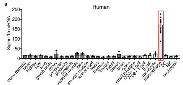 Siglec-15的Mrna在人体各正常组织的表达情况