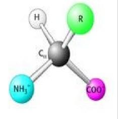 氨基酸产品图片